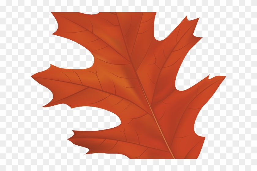 Autumn Leaves Clipart Tree - Red Oak Tree Leaf Clipart #1711656