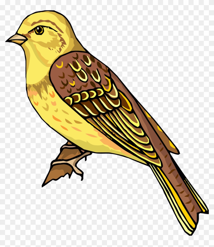 Staying Realistic Bird Clipart Png - Clipart Pictures Of Bird #1726236