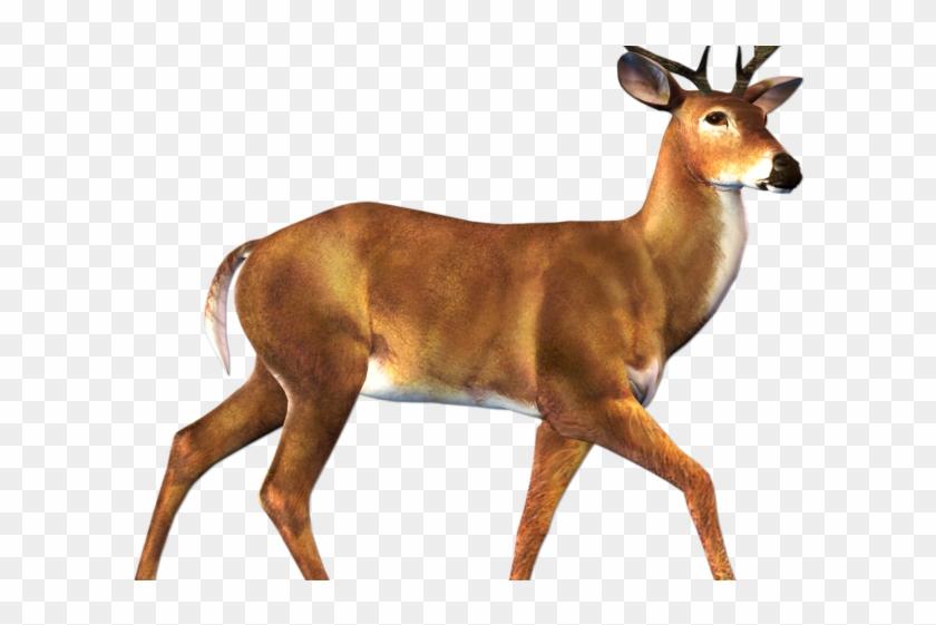 Buck Clipart Transparent - Deer Animal Clipart #1727391