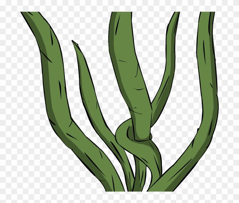 Kelp Drawing Macrocystis Pyrifera - Seaweed Clipart Transparent Background #1730241