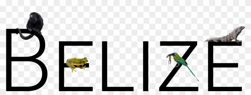 Mccall Wildlife Photography, Custom Graphic For Belize - Graphic Design #1736255