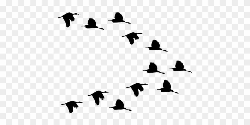 Flock Of Birds Clipart Transparent Pencil And In Color - Flock Of Birds Transparent Background #1753421