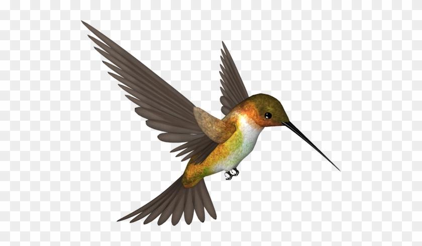 Фотки Bird Clipart, Hummingbird Moth, Yandex Disk, - Picsart Photo