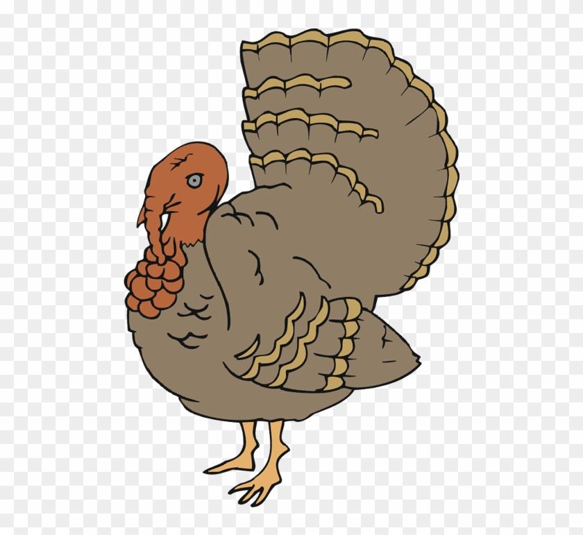 Turkey Feathers - Turkey #268684
