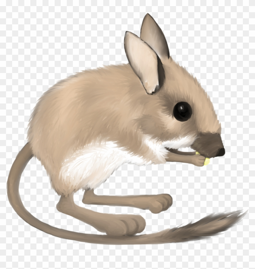 Kangaroo Rat Clipart - Desert Kangaroo Rat Clipart #47679