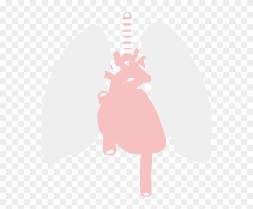 Anatomy - Clipart - Clip Art - Free Transparent PNG Clipart Images ...