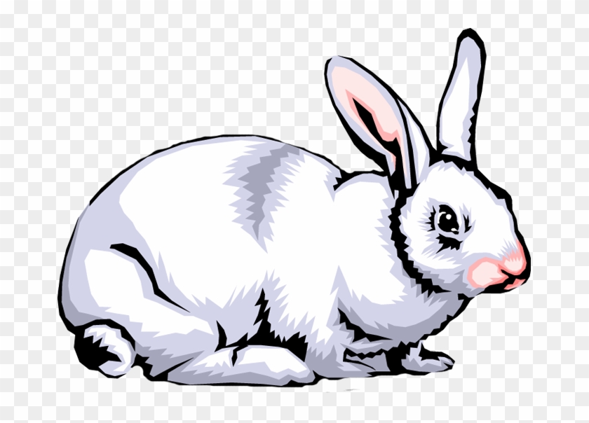 Rabbit Clip Art Images Free Clipart Png - Clipart Images Of Rabbit #48196