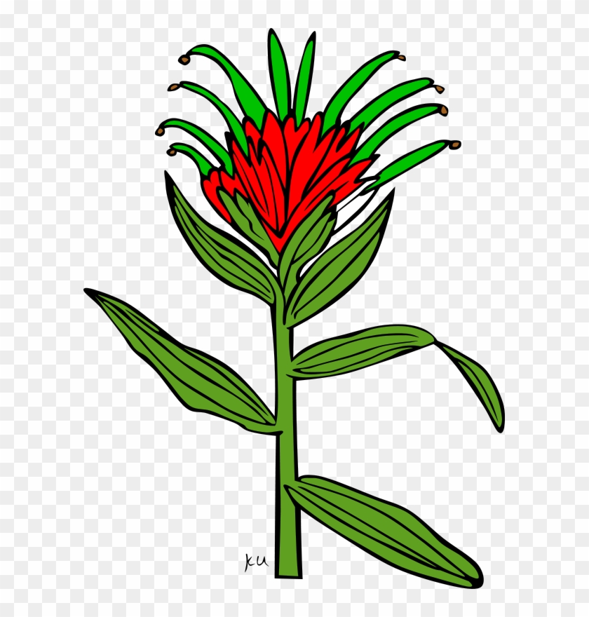 Open Clip Art - Indian Paintbrush Flower Coloring Page #48653