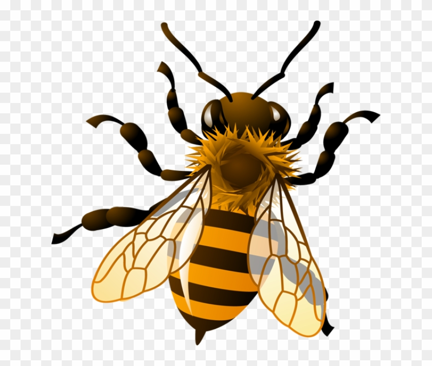 Bee Clip Art - Honey Bee Clip Art #51286