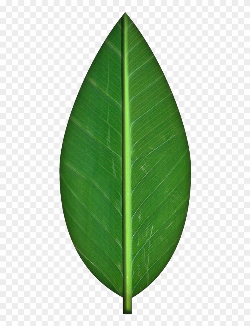 Leaves Transparent Background Clipart - Orange Tree Leaf Png #271181