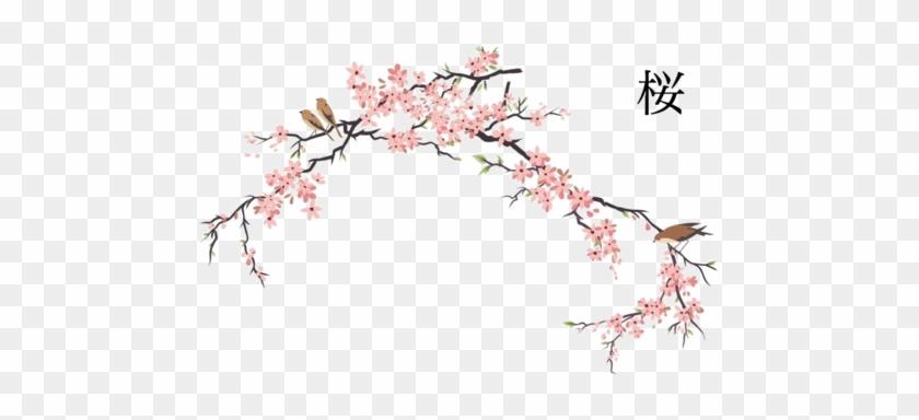 Anispace - Net - Namaniekoutei - Japanese Cherry Blossom Drawing #271927