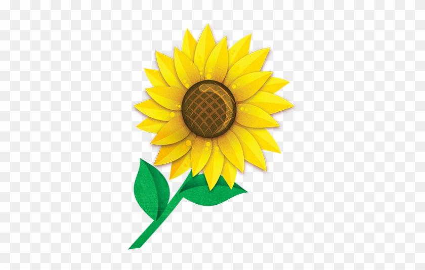 Sunflower - Sunflower #272031