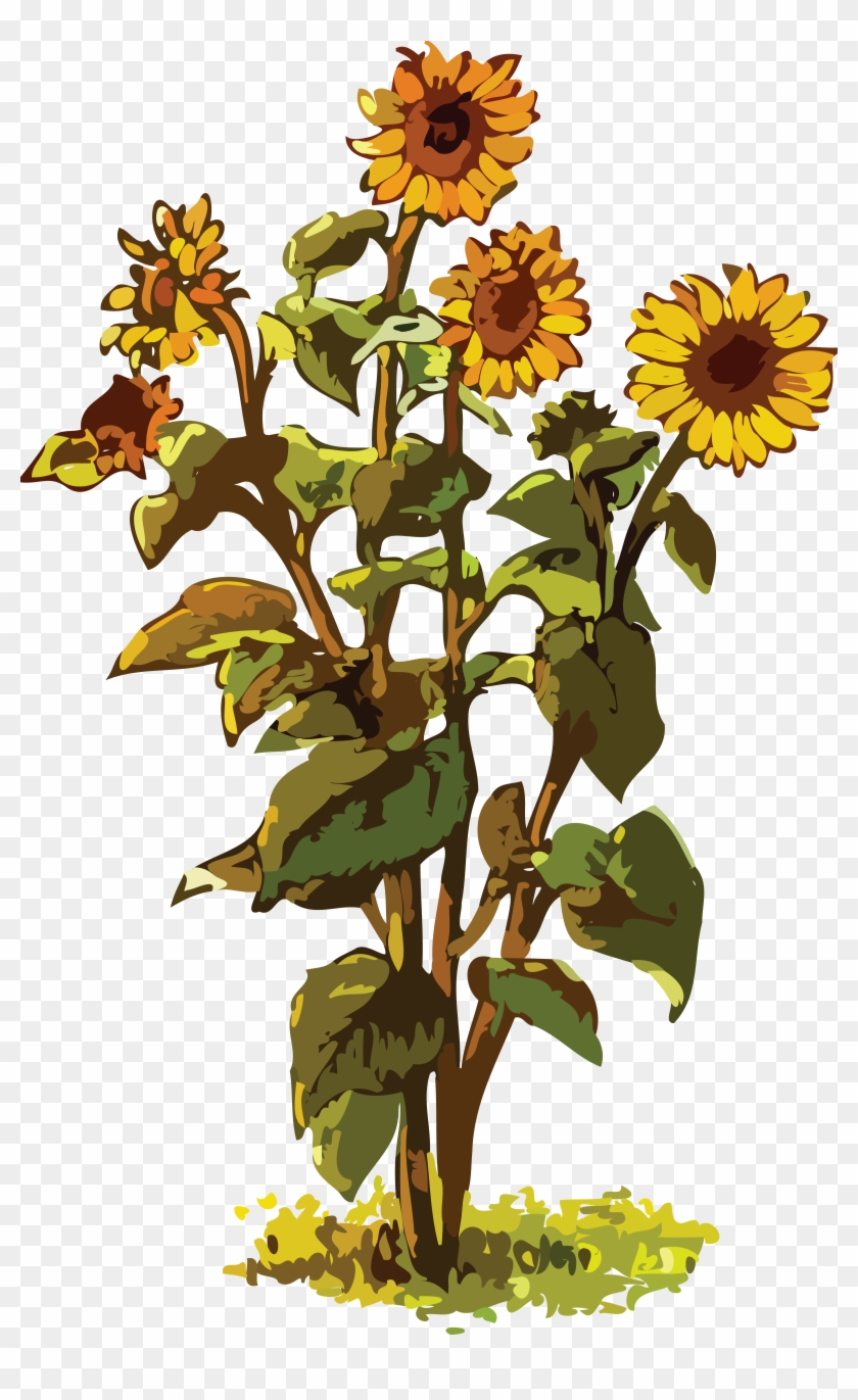 Free Clipart Of A Sunflower Plant - Sunflower Plant Clipart #272105