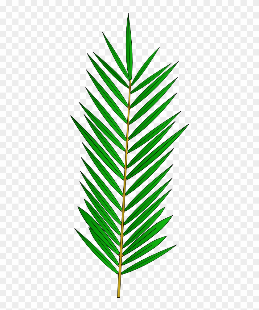 Palm Tree Leaf Template Palm Tree Leaf Template Free Transparent
