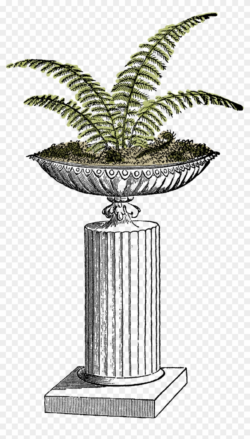 I Created This Digital Fern Download From A Vintage - Clip Art #272265