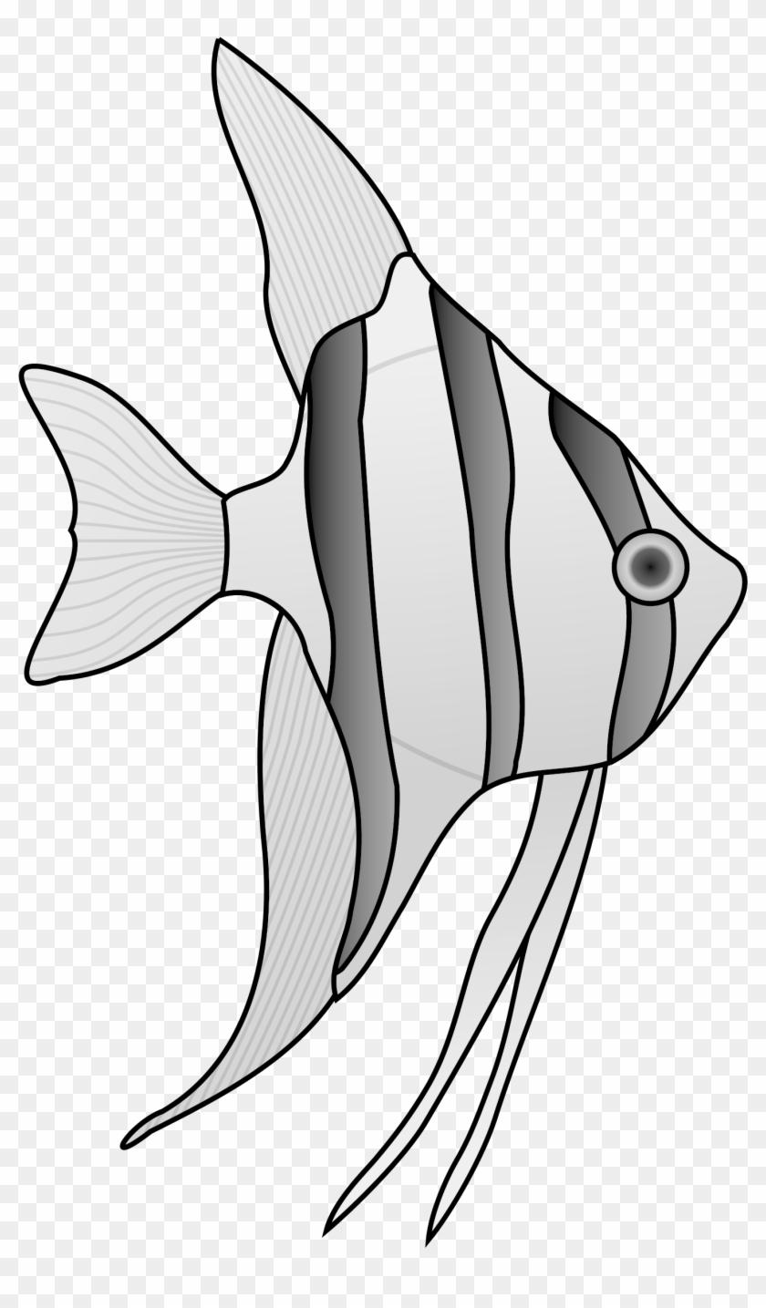 Angel Fish Cliparts Clip Art Library - Salt Water Fish Drawing #272700