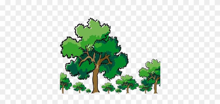 Trees, Oak, Nature, Green, Branch, Wood - Oak Tree Clip Art #272762