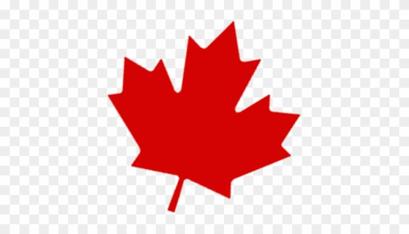 Canadian Maple Leaf Transparent Photo Png Images Canada Maple Leaf Transparent Free Transparent Png Clipart Images Download