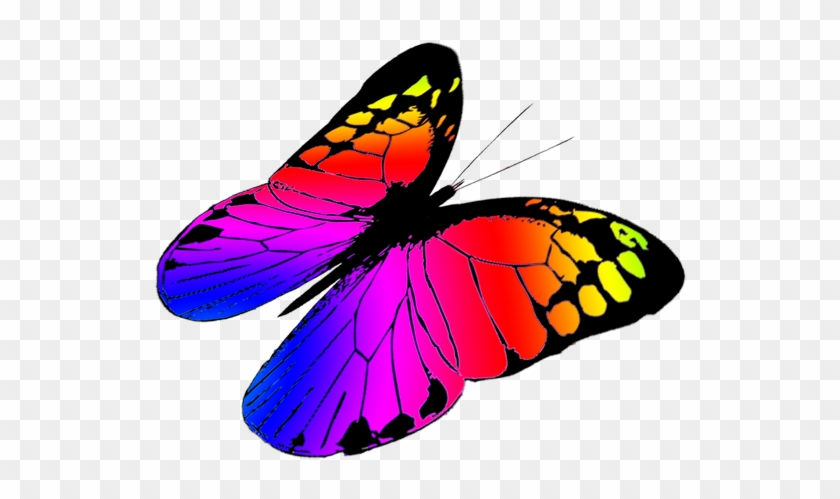 Free Butterflies Drawing, Free Butterfly Clipart - Colorful Butterflies Flying Png #273733