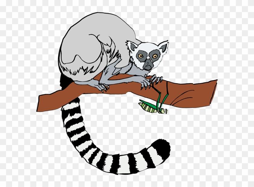 Lemur Clip Art - Ring Tailed Lemur Clip Art #274453