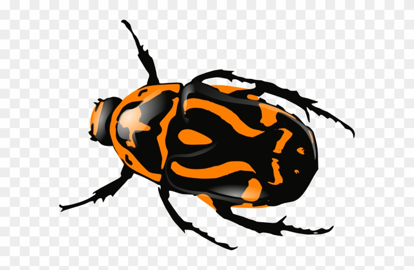 Orange Clipart Bug - Black And Red Beetle #275398