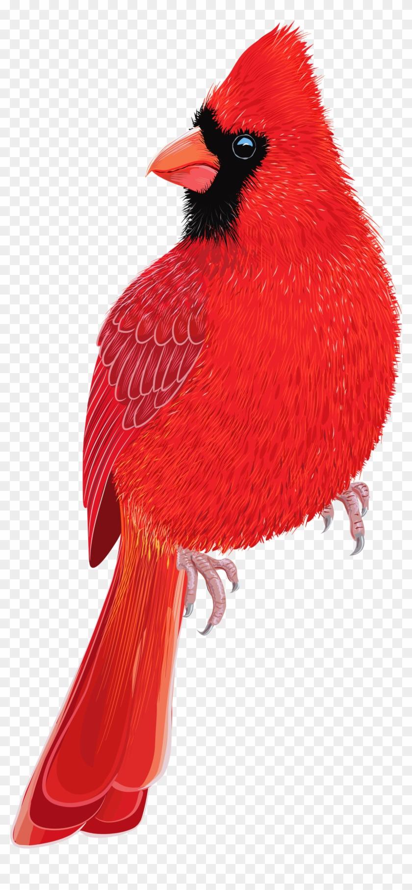 Red Bird Png Clipart Image - Pajaros Rojo #275682