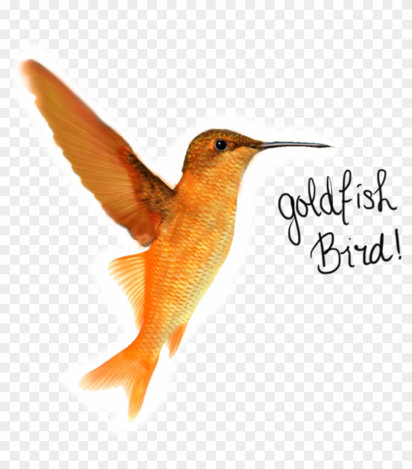 Goldfish Bird By H-nnaa - Goldfish Bird #275954
