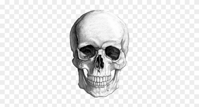 Photo Collection Transparent Skull Tumblr - Skull Drawing #278009
