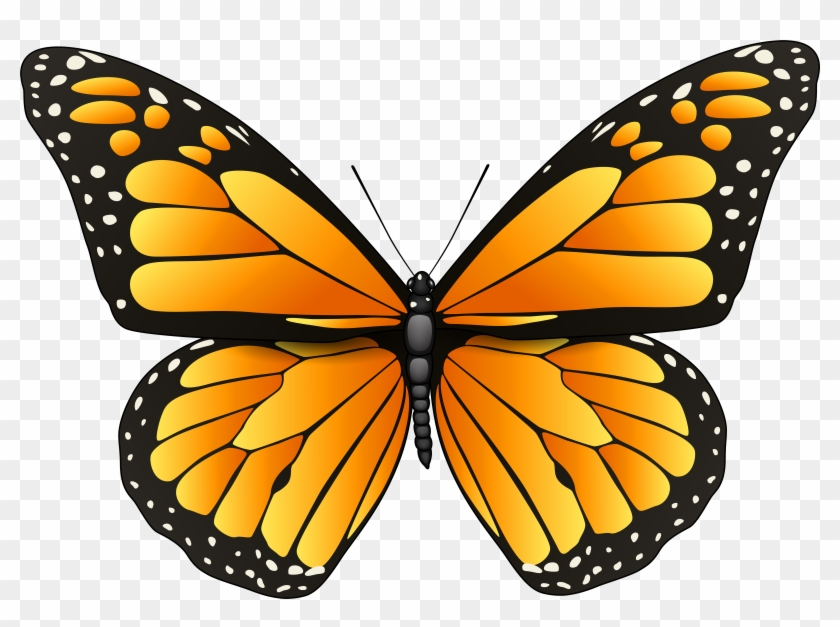 Clipart Orange Butterflies Butterfly Png Clip Art Best - Butterfly Coloring Pages #278527