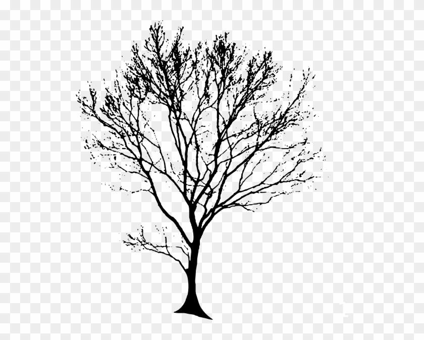 Free Clipart Line Drawing Live Oak Tree - Tree Black Drawing #284361