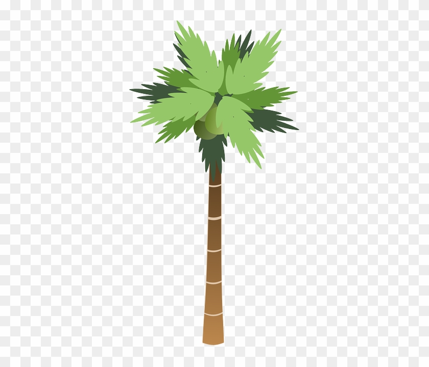 Icon, Food, Fruit, Outline, Drawing, Beach, Leaf, Palm - Tall Tree Clip Art #284381