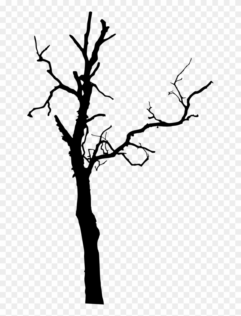 575 × 1500 Px - Dead Tree Silhouette Png #284482