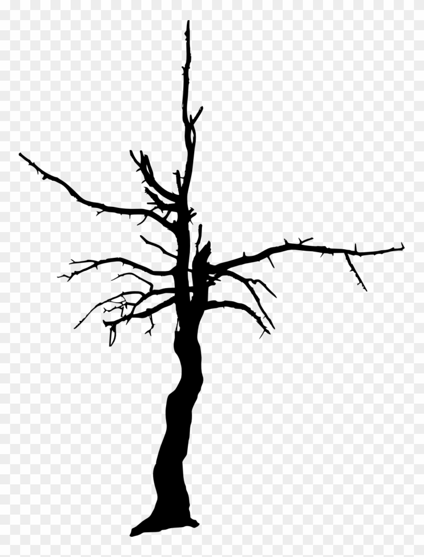 1020 × 1500 Px - Dead Tree Transparent #284489