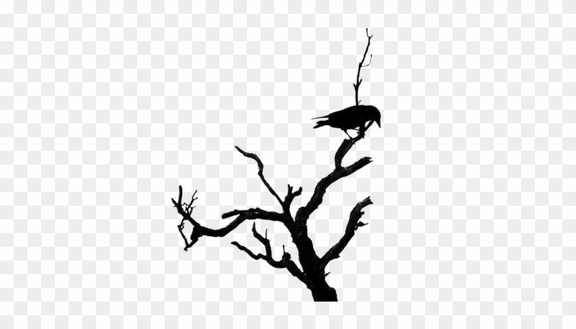 Dead Tree Psd - Dead Tree Branch Silhouette #284555