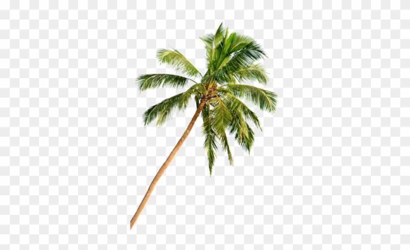 In Delray Beach, Florida, The Beach Is Just The Beginning - Palm Tree Beach Png Hd #284700