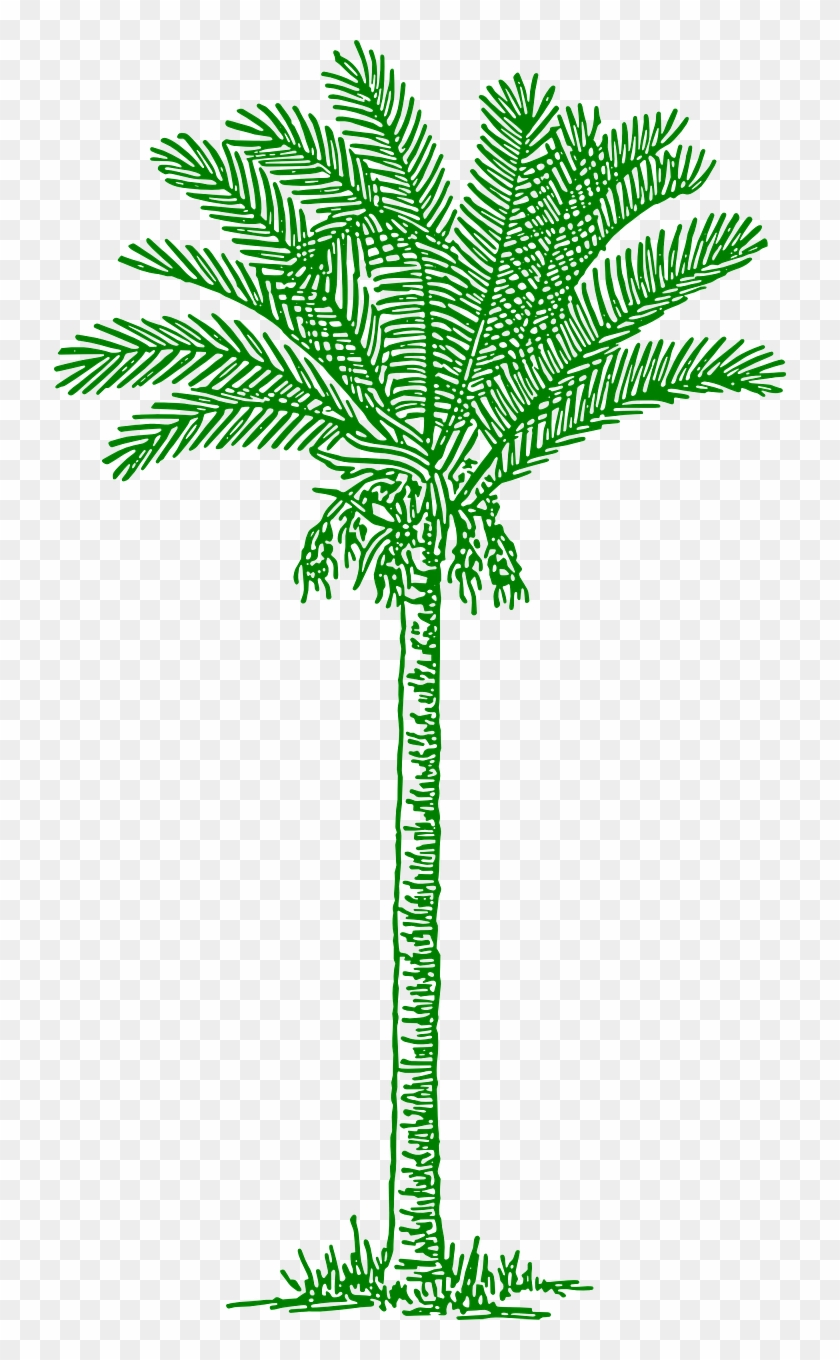 Palmtree Leaves Beach Tropical Png Image - Lines Drawing Palm Tree #284725