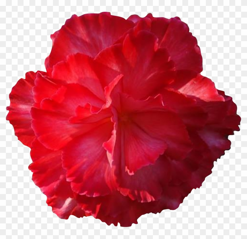Red Flower Clipart Real Flower - Real Flower Clip Art #285415