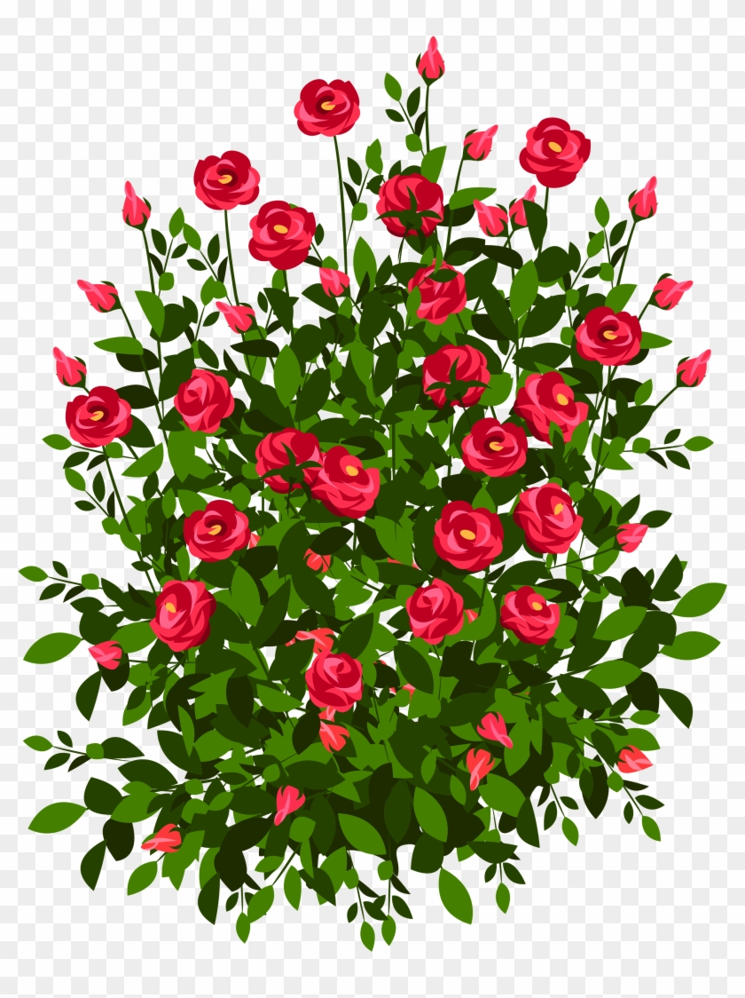 roses plant clipart rose bush drawing free transparent png