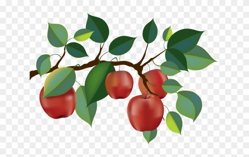 Top 88 Apple Tree Clip Art - Apple Tree Branch Clipart #285699