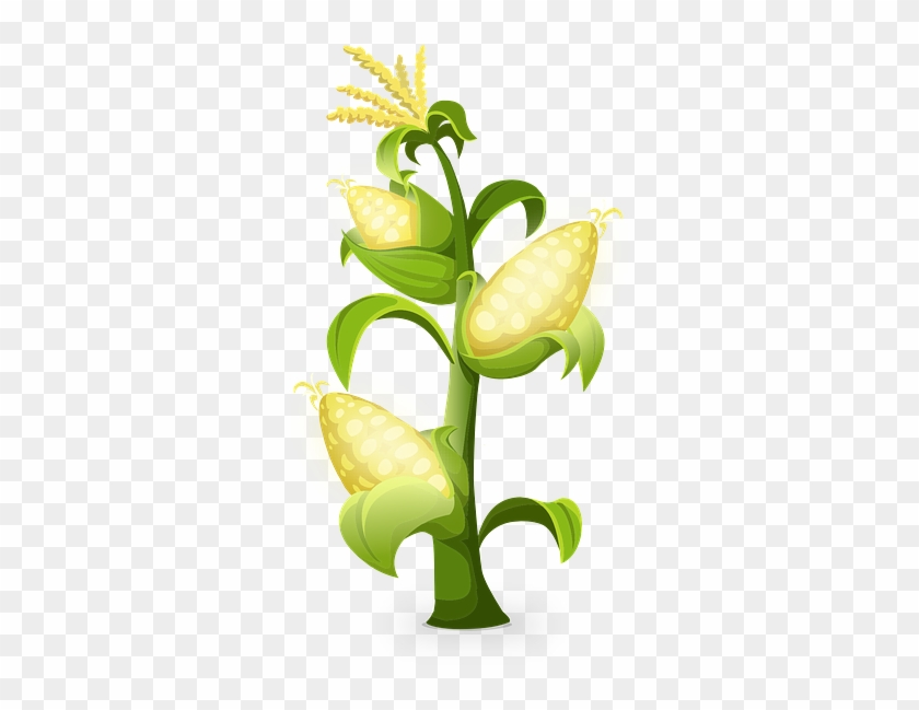 Picture Quality Qt Gambar Pohon Jagung Animasi Free Transparent Png Clipart Images Download