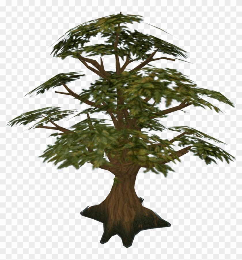 Pine Tree Clipart Swamp Tree - Runescape Oak Tree #286047