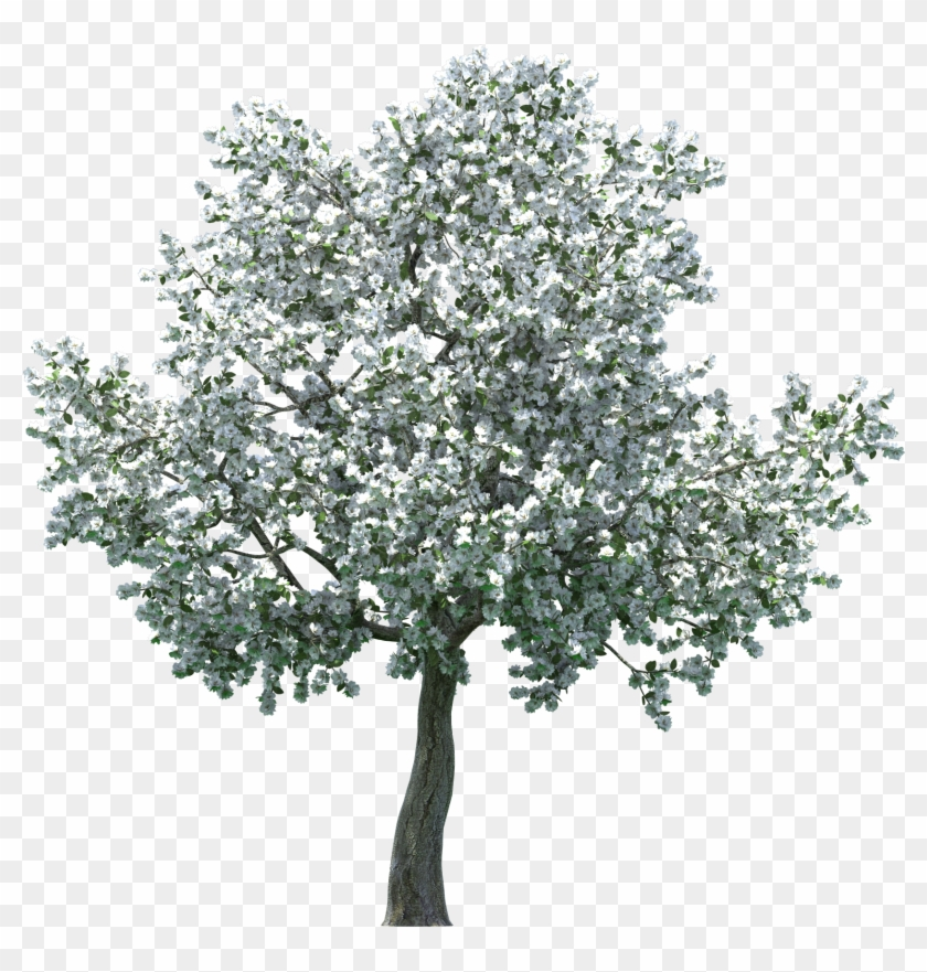 Realistic Blossom Tree Png Clip Art - Apple Blossom Tree Png #286053
