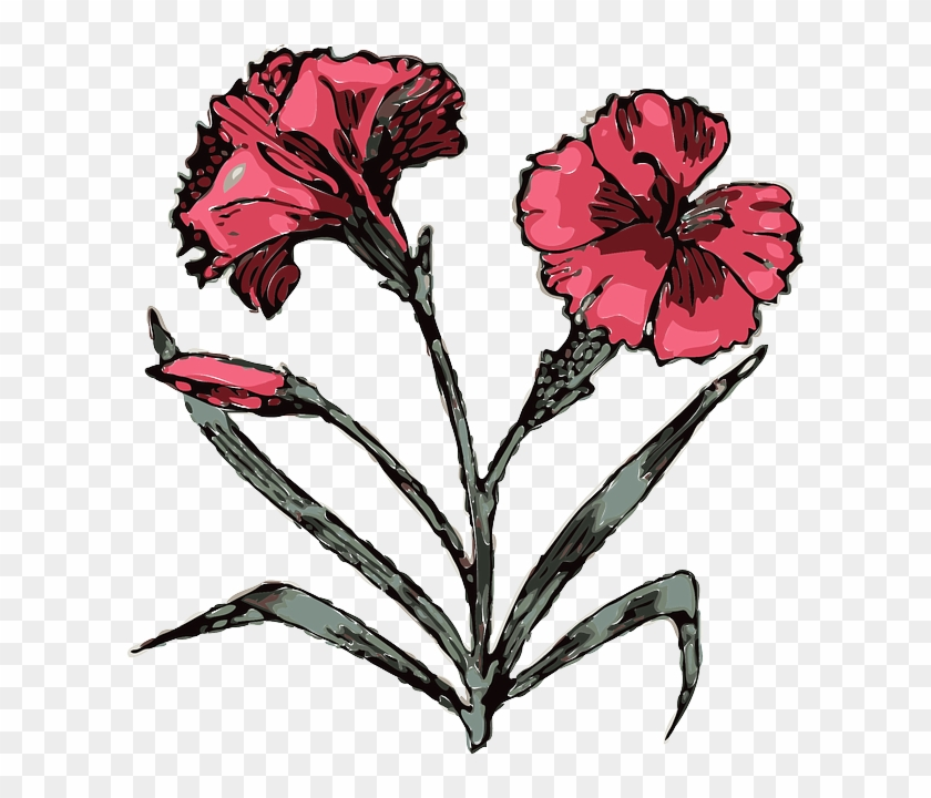 Drawing Flower Flowers Cartoon Pink Plant Angiosperms Clipart