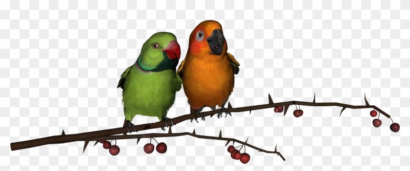 love birds download png png love birds hd free transparent png