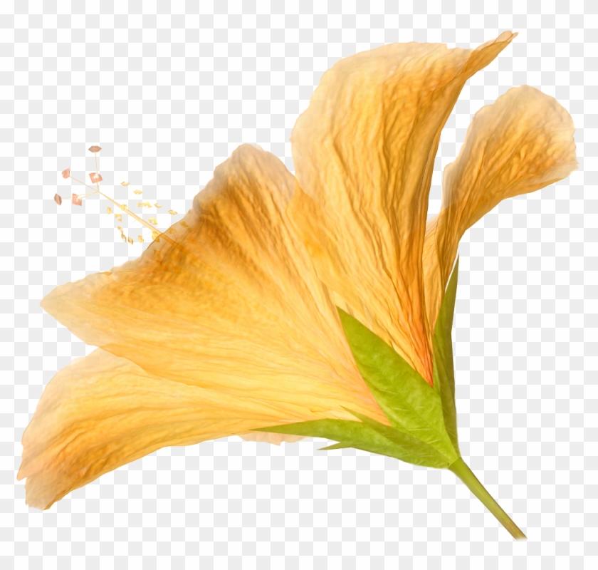 Flower Orange Hibiscus Clip Art - Flower Orange Hibiscus Clip Art #287559