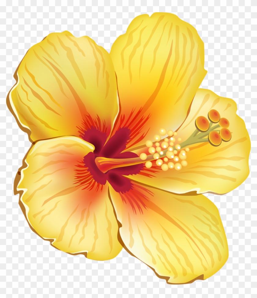 Tropical Clipart Orange Hibiscus Yellow Hibiscus Shower Curtain