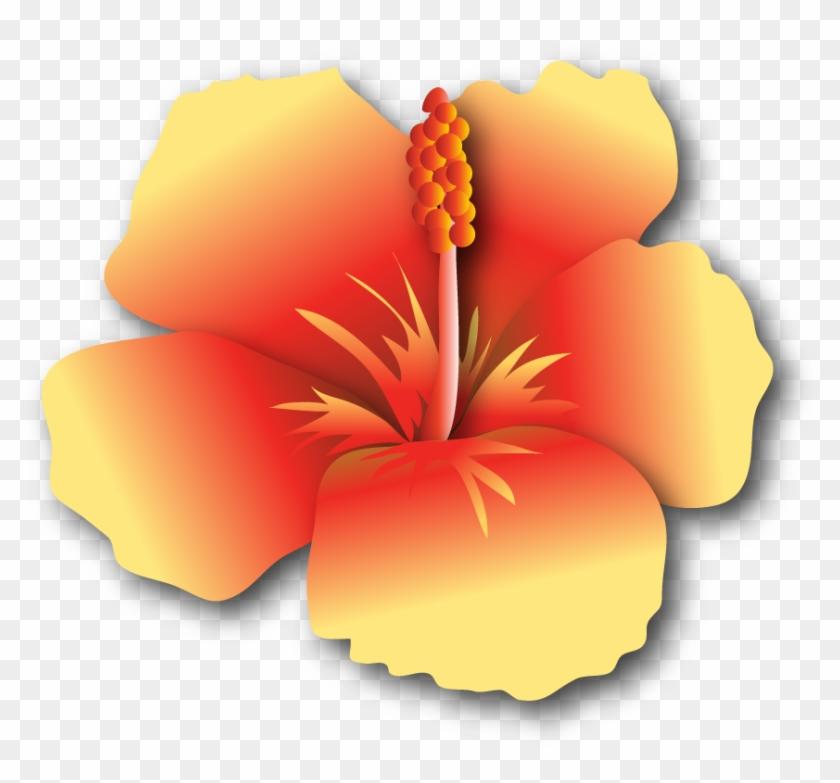 Hibiscus-yr $500 - - Hawaiian Hibiscus #288068