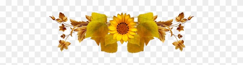 Sunflower #288151