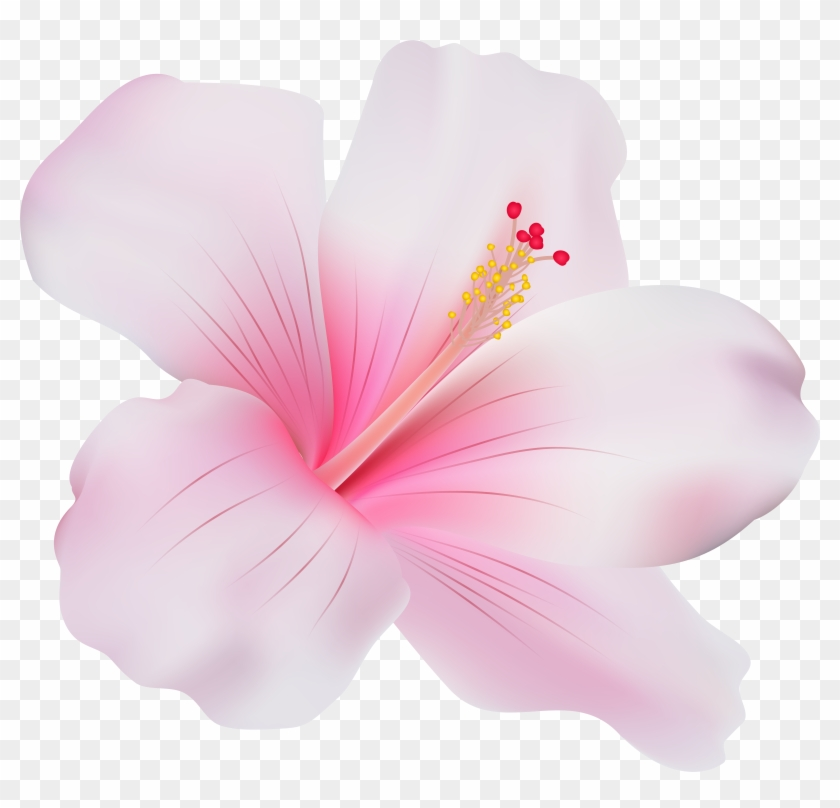 Pink Hibiscus Png Clip Art - Pink Hibiscus Flower Png #288251