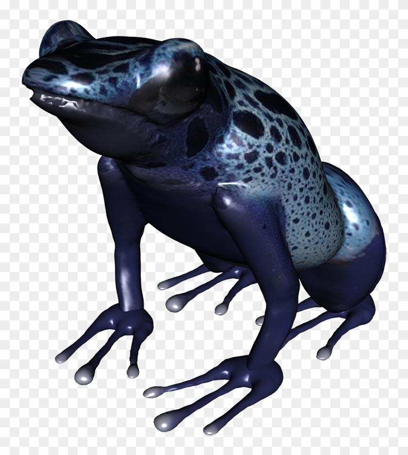 Underside Of Frog Png, Blue Frog Png - Toad #288339